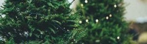 christmas-page-header-with-tree-in-room